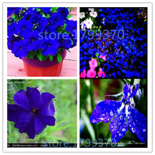 Free Shipping 30 Attractive blue Petunia Seeds Exotic Flowers Bring you A Better enjoyment DIY Garden
