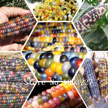 GGG Rainbow corn seeds, vegetables seeds, grains and miscellaneous good quality maize seed, 10 particles / bag(China)