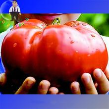 100 Seeds / Pack Giant Heirloom Tomato Seeds Vegetables * Fruit Plants Genuine Fresh Sementes Garden Bonsai Plant Pot Semillas(China)