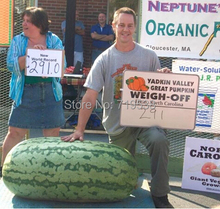 Fruit seeds 10 seeds Giant Watermelon Seeds- HUGE 200 lbs,Home gardening, free shipping!