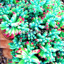 100pcs A pcsking Mix Succulent Seeds rare Lithops Bonsai Plants Seed For Home Garden Flower Pots Planters 2016 Diy Cactus seeds