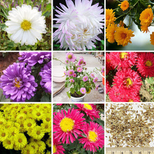 120 pcs /bag 9 Color Available Callistephus Chinensis Seeds Balcony Potted Bonsai Plant Flower Seed Aster Seeds