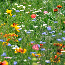 "400 Beautiful Wildflower ""Low Growing"" Seeds to Suit all Types of Soils & Growing Conditions Beautiful gardens"