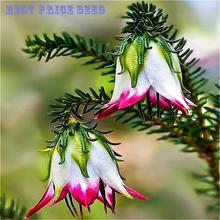 Sale 6Kinds of Fuchsia Perennial Flower Seeds Can be Choose Potted Flowers DIY Planting Flowers Bell Flower Seeds - 50PCS Dress