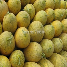 10 seeds  Super Big Sweet honey-dew melon Seeds Hami melon Seeds Fruit Seeds Cantaloupe Jumbo Melon Heirloom Succulent Plants