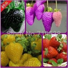 Vegetable planting balcony pot spent four seasons strawberry fruits seeds 100seeds/pack(China)