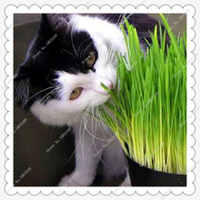 200 pcs/bag Cat grass seed, grass seed eating kittens Garden Plant Antioxidant Pets Health Food(China)