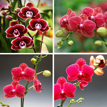 Diy diamond painting cross stitch flower crystal square diamond sets decorative diamond embroidery butterfly orchid 47 B268