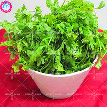 11.11 Big Promotion!100 pcs/lot parsley seeds green vegetable seed condiment in garden&home aweet fresh annual herb plant seeds(China)