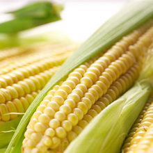 Super - Sweet Fruit Corn Seed Cultivation Sweet Waxy High - Yielding Species Can Be Eaten Raw Corn Seeds 10 Seeds(China)