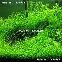 2016 New 1000 Pcs Aquarium Plant Seeds,Water Aquatic Plant Ornamental Grass Seeds, Very Easy Grow Seedlings Hot Sale