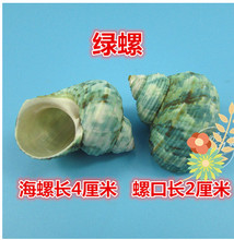 02 Decoration Crafts Natural conch shells hermit crab shell fish roll shell special aquarium decorations.4CM