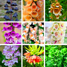 Big Promotion! 100 Pcs/Bag Fritillaria foxglove Digitalis potted bonsai garden seeds DIY home garden(China)