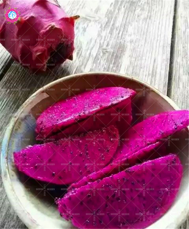 HTB1supGzHuWBuNjSszgq6z8jVXaK - 100pcs Dragon fruit Seeds Dwarf Fruit Trees Bonsai