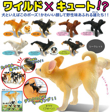 Japan pets Original Capsule toys 6 sets PEE PEE puppy cute Teddy kawaii Shiba Inu dog gashapon figure kids toys collectibles(China)
