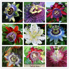 Passion flower (Passiflora incarnata),100pcs/bag Certified Pure Live Seed,tropical flower seeds for home garden plant seeds