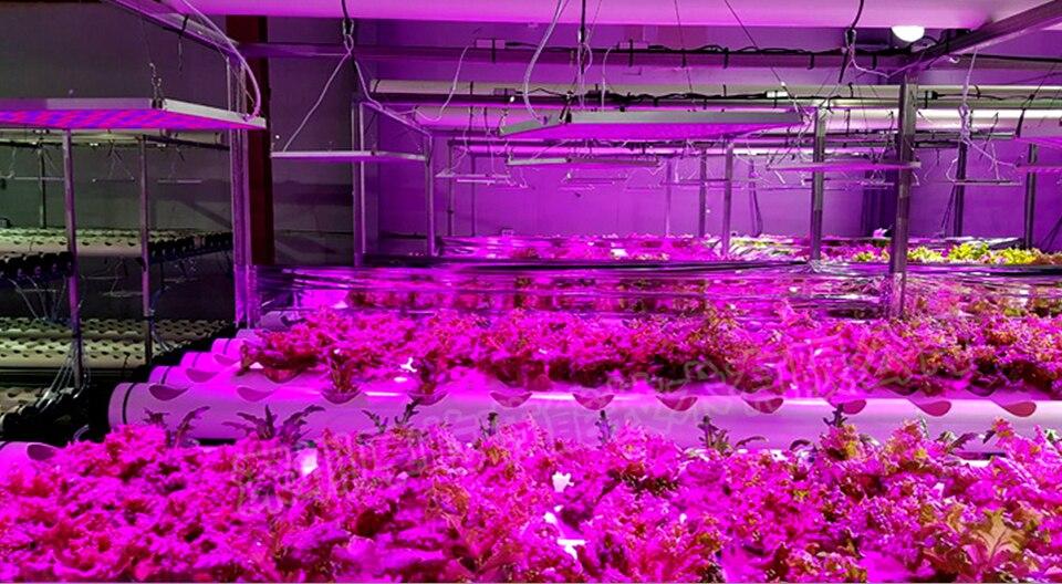 panel led grow light (16)