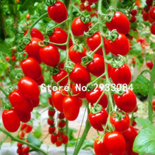 50 pcs tomato seeds Milk red tomato seeds, cherry tomatoes, tomato seeds organic fruits and vegetables