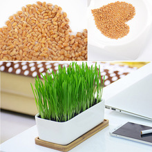 Foliage Plant High Quality Green Wheatgrass 800 Wheat Seeds Great Sprouting Cat Grass Garden Decor Office Bonsai Healthy Treat