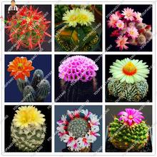 200pcs Mix Cactus Seeds Japanese Succulents Seeds Rare Indoor Flower Mini Plant For Home Garden