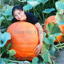 Grade AAAAA 30pcs /pack Super Big Chinese Pumpkin seeds Vegetable Seed Hongkong Post Free Shipping 49%(China)