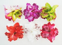 NEW  FREE SHIPPING 100PCS/lot  KL36206  10colors14X 7cm 3pcs  Silk  Orchid Bridal hair clip  Mixed  Hawaii  Bridal  flower