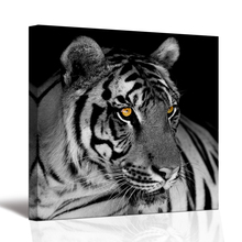 Visual Art Decor 1 Panel White Tiger Canvas Painting Gold Eye Animal Pictures Print on Canvas Home Decor for Living Room SV10245(China)