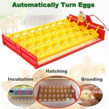 32 Eggs Universal Quail Poultry Incubator Turner Tray PCB Turning Motor For Incubator Chicken Hatcher Incubation Tools Equipment(China)