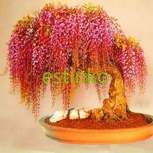 10pcs/lot Rare Gold Mini Bonsai Wisteria Tree Seeds Indoor Ornamental Plants Bonsai Tree Seeds Home Garden Potted Plant(China)