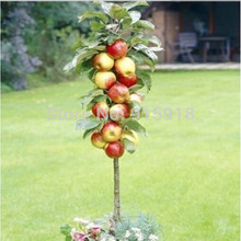 100pcs Bonsai Apple Tree Seeds rare fruit bonsai tree indoor plant for home garden free shipping via hongkong post airmail(China)