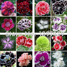 Promotion! 200 Dianthus Seeds , 24 kinds mixed packed, Sweet William flower, easy to grow ,high germination DIY garen(China)