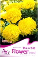The seeds of various chrysanthemum chrysanthemum pot marigold flower seed says to one's health Can make perfume 50 grains