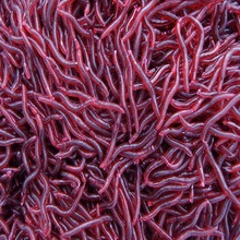 100Pcs/Lot 4cm Red Earthworm Maggot Soft Plastic Fishing Lure Artficial Bait Bionic Red Worm Fishy smell for Fishing Hot Sale