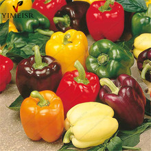 Sweet Rainbow Pepper mix Colour Seeds Non GMO Organic edible vegetable seeds for Home Garden Outdoor Bonsai plants 50seeds/bag