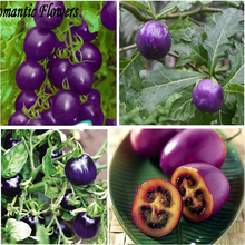 Purple Cherry Tomatoes Seed Balcony Fruits Seed Vegetables Potted Bonsai Potted Plant Tomato Seeds -100 Particle/bag