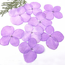 China Supplier Purple Hydrangea Real Pressed Flower Raw Material For Iphone 8 Case Decoration Free Shipment 120 Pcs(China)