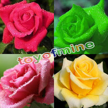 50 Pcs Multi-color Rare Rainbow Rose Flower Seeds Your Lover Garden Plants