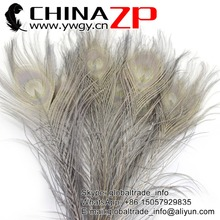 CHINAZP Factory Exporting 100pcs/lot Unique Party Decoration Full Eye Dyed Grey Peacock tail Feathers(China)