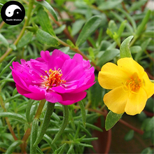 Buy Portulaca Grandiflora Flower Seeds 200pcs Plant Chinese Sunflower Pine Peony