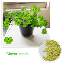Clover Seeds Lucky Grass Fragrant Lawn Groundcover for home & garden planting 100% true seeds 100 pcs / bag DIY Free Shipping