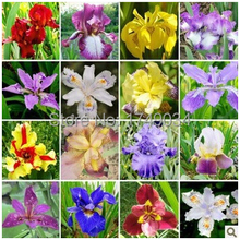Plant bonsai butterfly iris seeds, Phalaenopsis orchids seeds Flower seeds (mix) - 100pcs