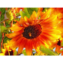 sunflower needlework diy diamond painting image flower mosaic cross stitch with rhinestones and diamonds Embroidery Craft Y970(China)