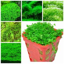 Hot Sale 1000Pcs Aquarium Plant Seeds, Radiation Absorptionn, Fish Tank Background Aquatic Indoor Ornamentals Free Shipping(China)
