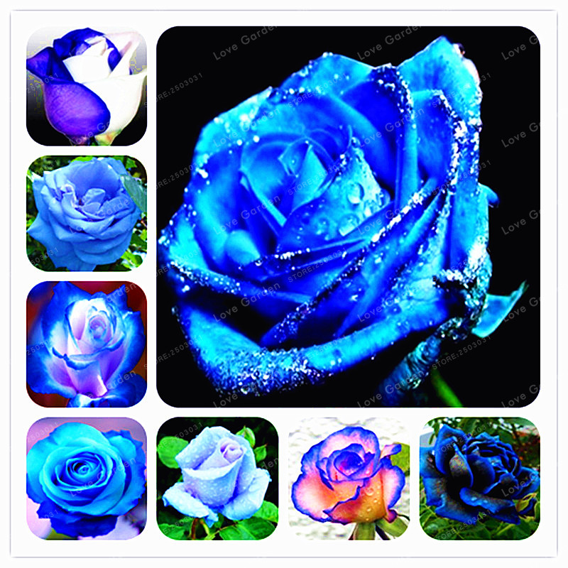 Sheet of Silver Pink Glitter Rose Poppy Butterfly Flower Stickers Craft 1212c50