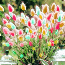 100 Pcs Rabbit Tails Grass Seeds,Colorful Fescue Seeds Bonsai Ornamental Grasses Seeds for Home Garden Potted Plants Decor