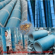 50 pcs/bag rare blue bamboo seeds, decorative garden, herb planter bambu tree seeds for diy home Little garden send gift