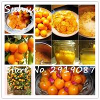 20pcs-bag-Fruit-Trees-Planted-Seeds-Dwarf-Organic-Sweet-Kumquat-Seeds-Orange-Fruit-Seeds-Tangerine-Citrus.jpg_200x200