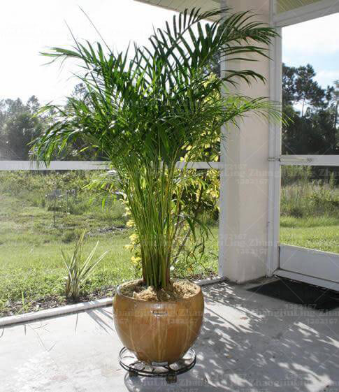 Indoor-Palm-Plant-mod