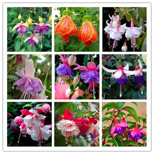 200 /bag Fuchsia Hybrida Hort Seeds,Bonsai Lantern Flowers,rare cheap chinese seeds For DIY home  Garden Home,Flores Semillas