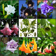 20 seeds/pack HEIRLOOM SEED bonsai tree mandala seeds home garden rare flower tree seeds(China)